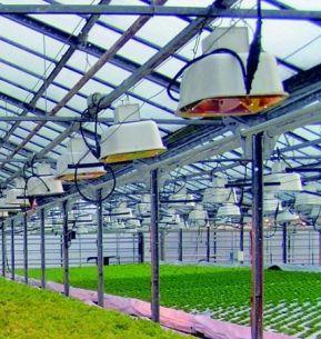 Gewächshausleuchte Agro, zweiteilig, eng strahlend, 400W / 600W