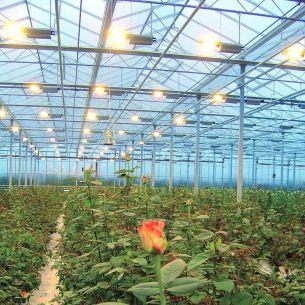 Gewächshausleuchte Flora ref., einteilig, eng strahlend, 400W